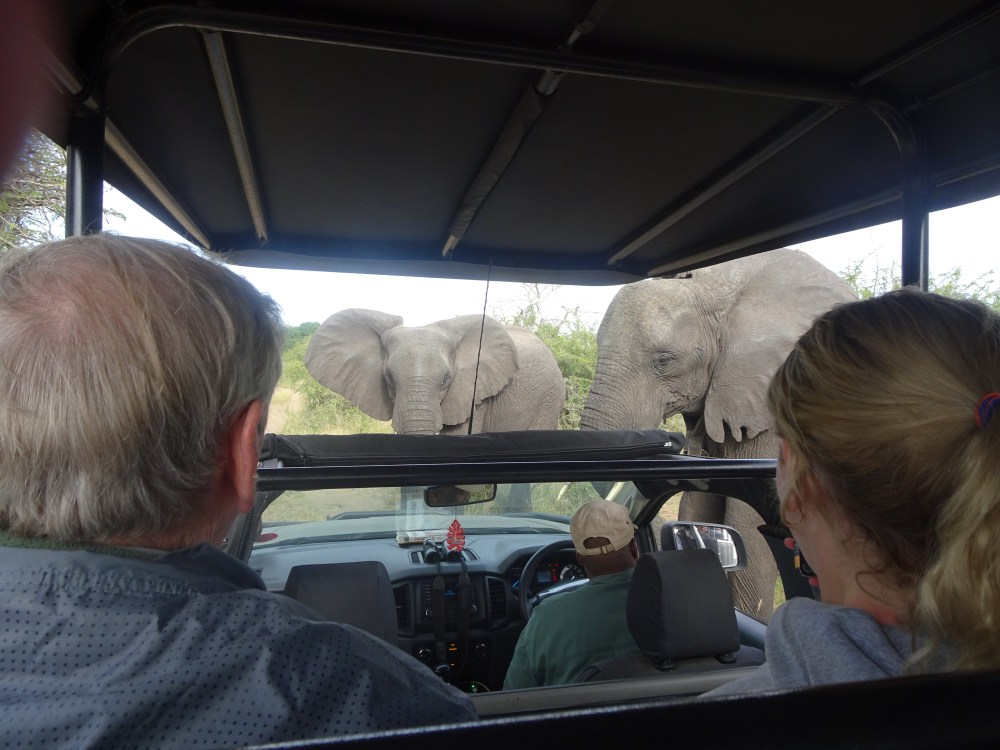 Two elephants cross the path of a car