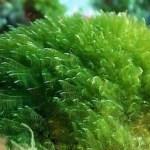Descopera puterea naturii ascunsa in spirulina