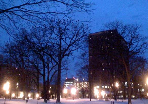 Crows in Central Park, Rochester, MN