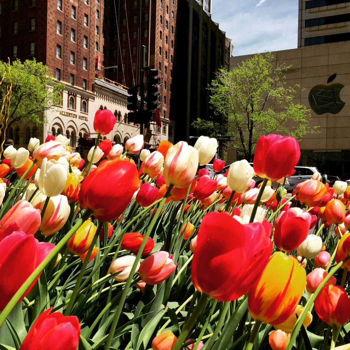 Flowers on Michigan Avenue