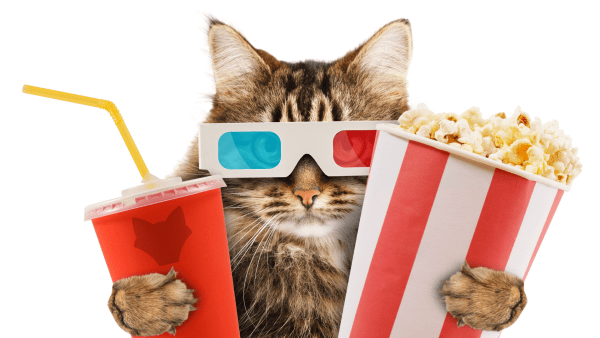 Cat Watching Movies