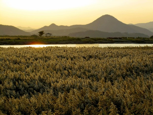 Suncheon Bay Reeds - Canon G10 (ISO 80)
