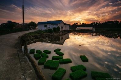 Goseong Planting Season Sunset-1