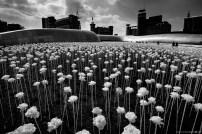 Seoul DDP Flowers-1