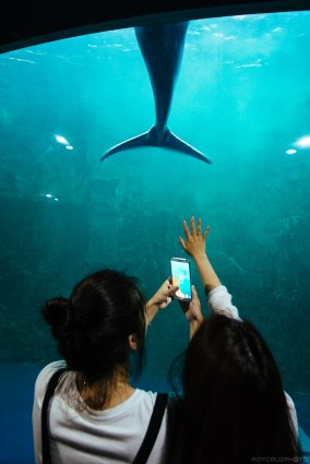 A woman reaches out for a beluga whale in the Hanhwa Aqua Planet Aquarium. Fuji X-E1, Samyang 12mm