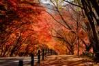 Naejangsan Autumn-5
