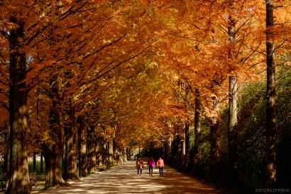 Naejangsan Autumn B-20
