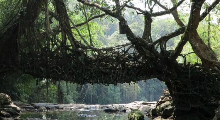 Живите мостове в Индия