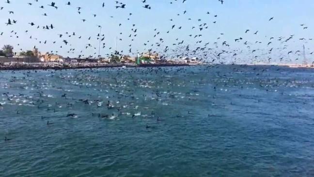 Мигриращи птици