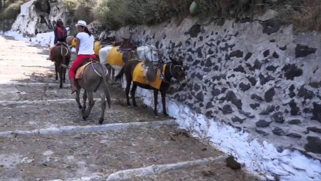 Разходка с муле
