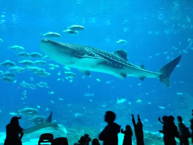 Oceanarium 2