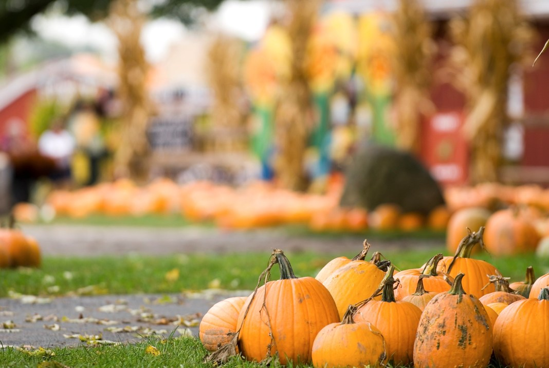Bucket List Worthy Fall Festivals