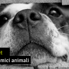 gadget-animali