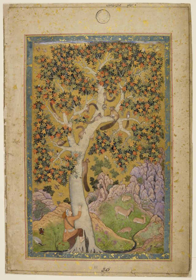 Squirrels in a plane tree. Image Credit: © The British Library Board