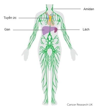 Ung Thư và Hệ bạch huyết