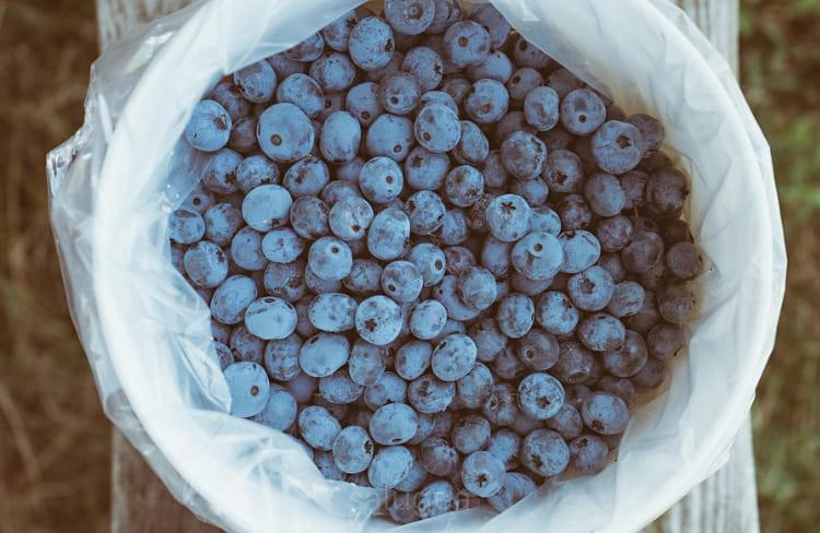 il piu potente antiossidante naturale
