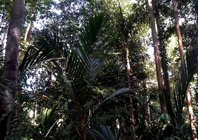 Rimak Adat Tawang Panyai, Hutan Adat Tapang Sambas-Tapang Kemayau Kalimantan Barat