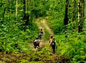 Saat Kesatuan Pengelolaan Menjadi Tumpuan Pengelolaan Hutan di Biak