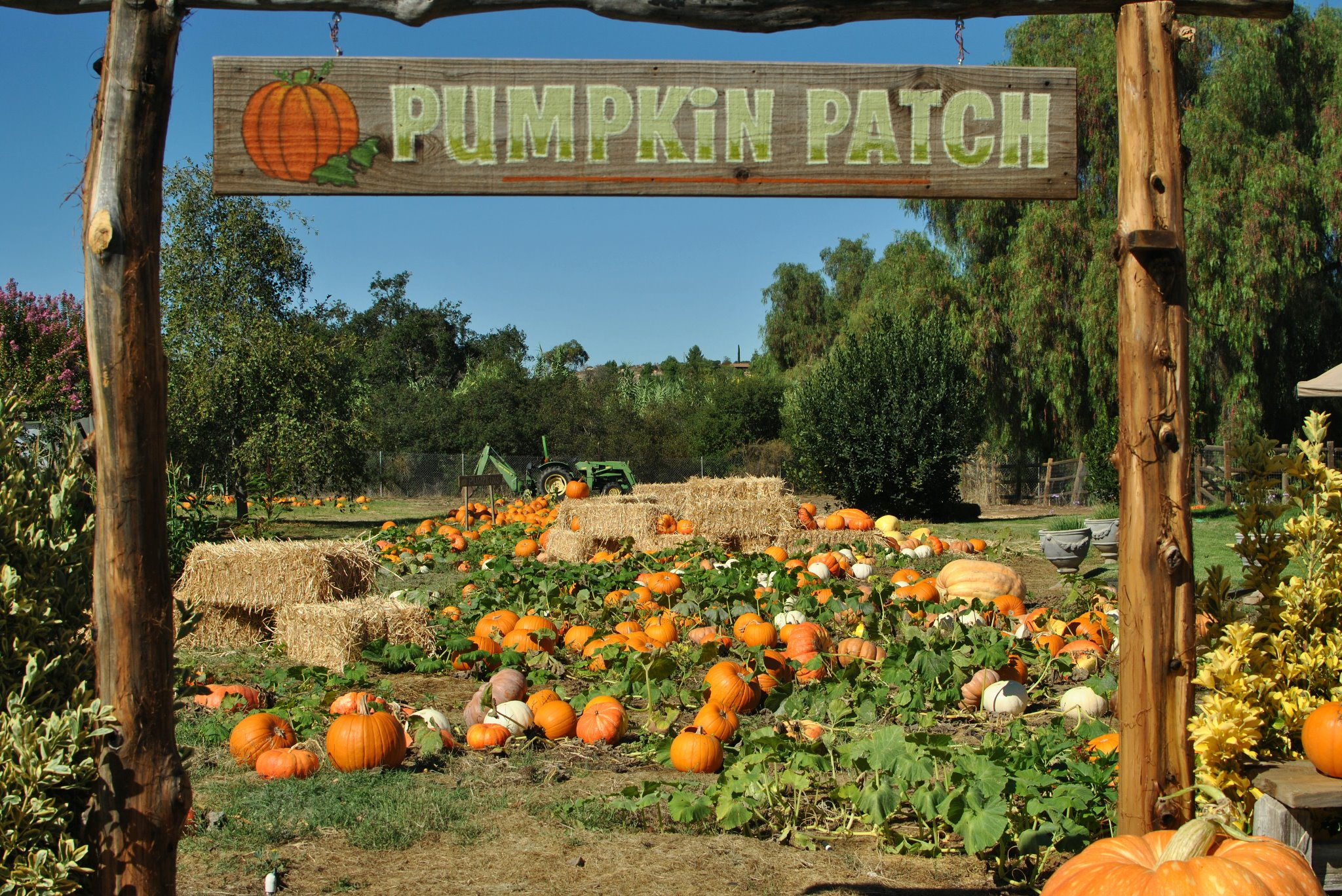 Find the Perfect Pumpkin Patch in San Diego  2013