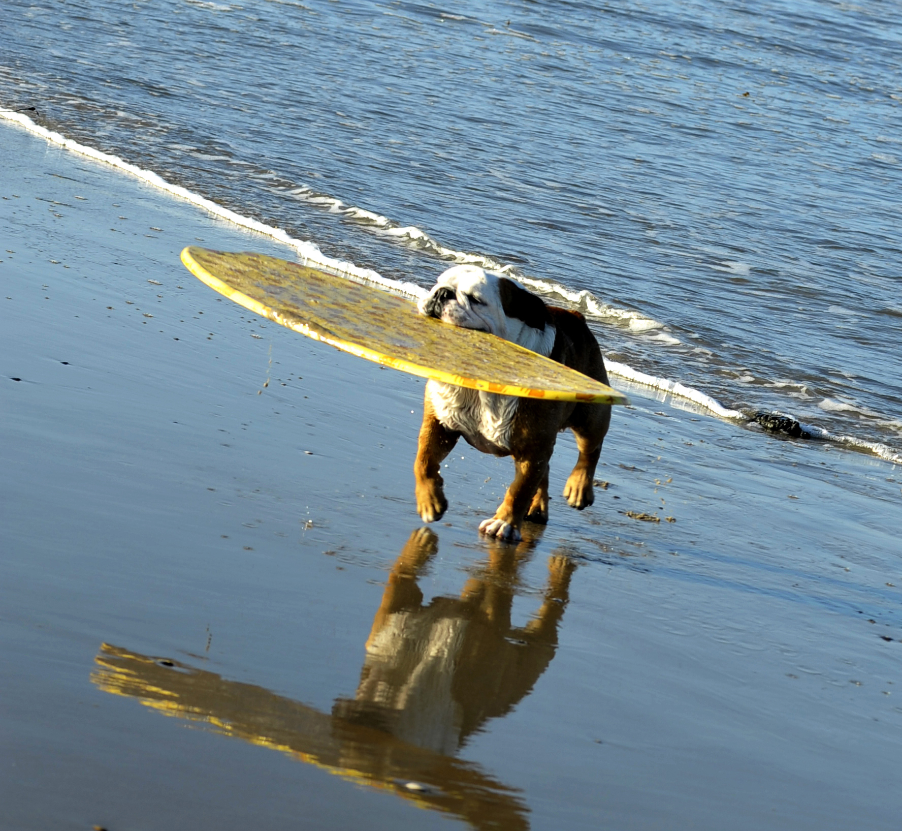 must love dogs and cats unusual activities for pet lovers in san diego