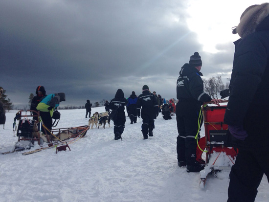 Dog Sledding, preparativi per la partenza (©foto Sandra Longinotti)