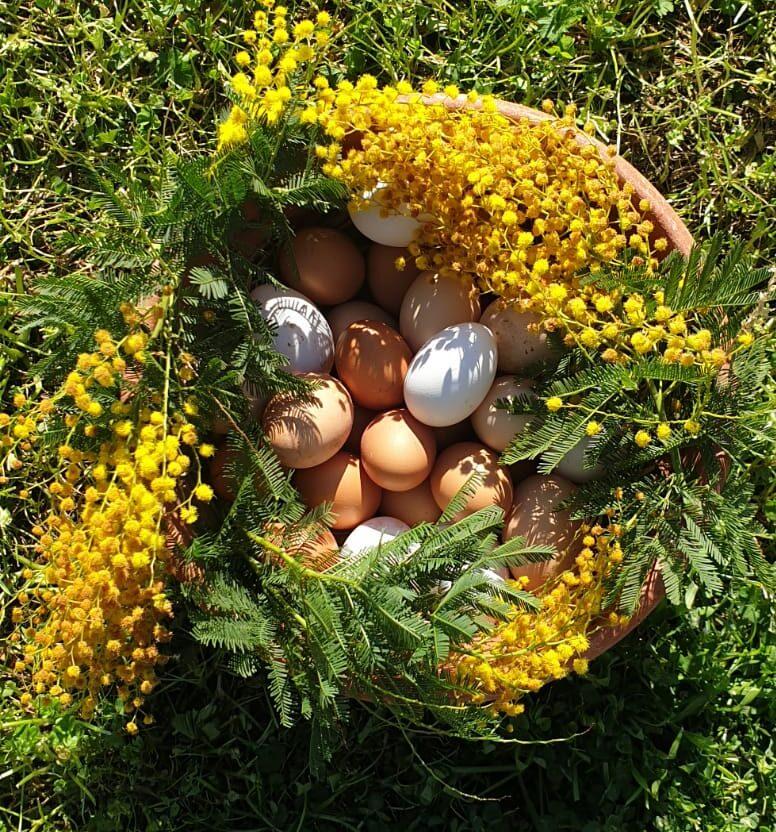 Uova dell'allevamento Libere di Giacomo Devoto   ©foto Stefano Caffarri
