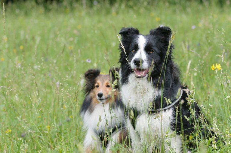 Amigo do coração: que cachorro combina mais com você?