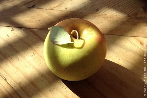 saxton.apple.leaf.sig