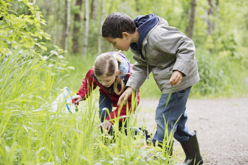 School children looking for bugs during outdoor education