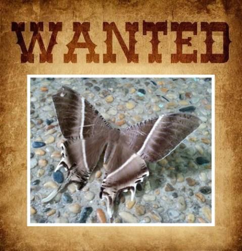 Wanted: Lyssa zampa
