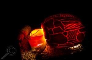 Ento-Lantern-2014-2
