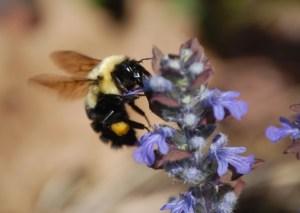 Lisa bees