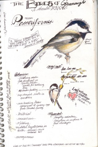 """Black-capped Chickadee"", Bethann Garramon Merkle (MFA), CommNatural.com, @CommNatural"