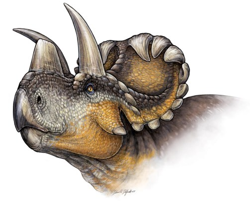 Life reconstruction of Wendiceratops in Evans and Ryan (2015). Image by Danielle Dufault, used with permission.