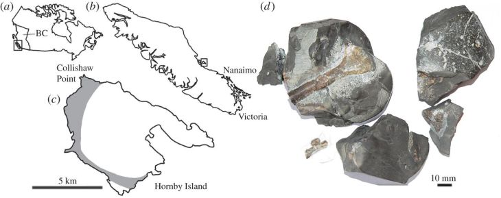 Maps showing the location where the fossilized bones were found on the left, and a photo of the actual pieces on the right