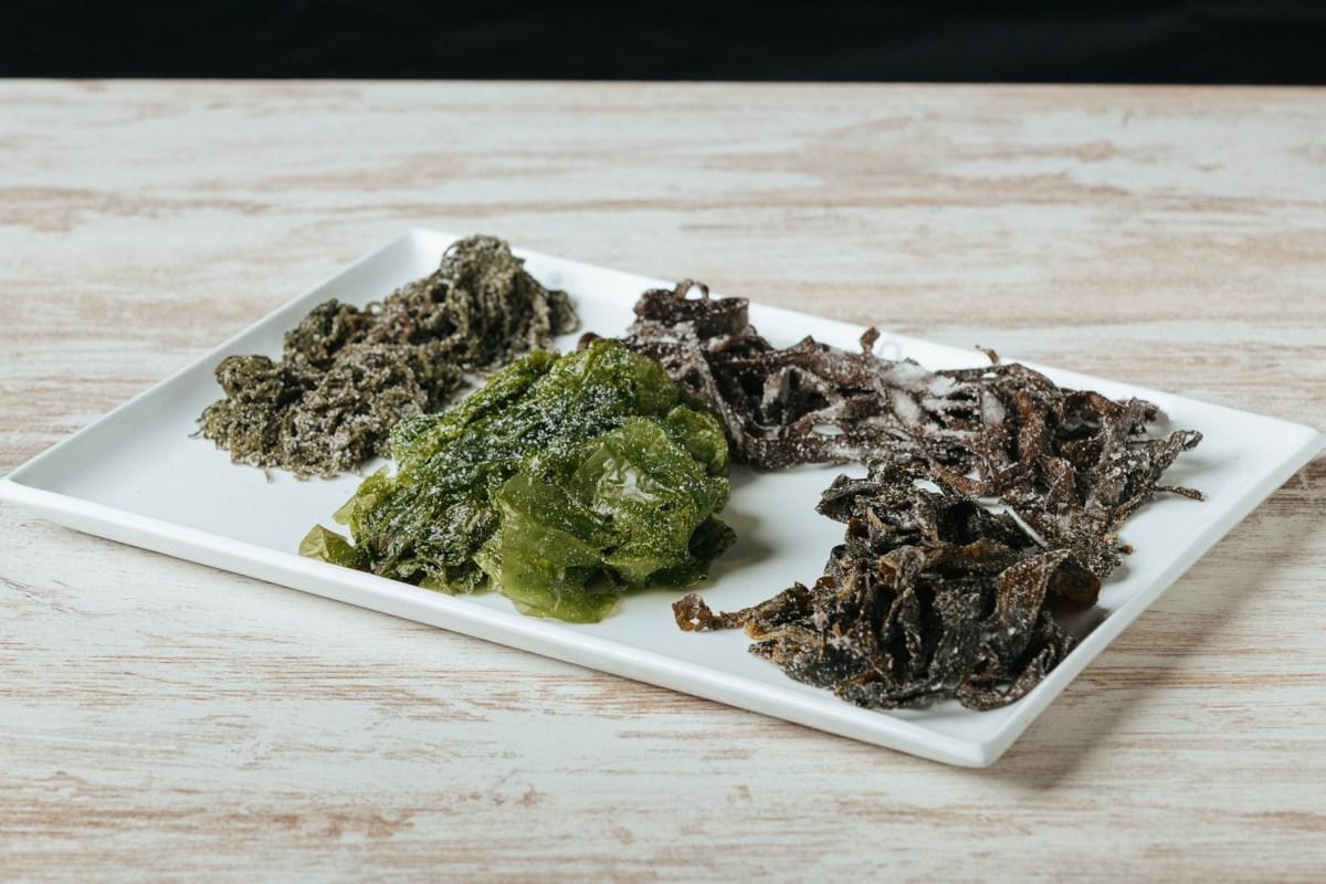 Nuevo Curso: Cocinar desde el Mar, Algas y Halófilas