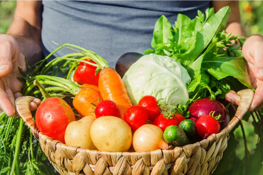 Las diferentes familias botánicas de las hortalizas