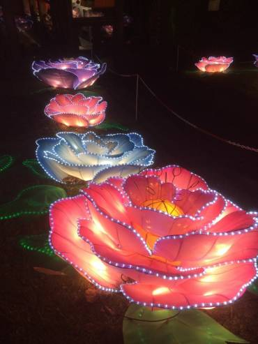 Great China lanterns - flowers