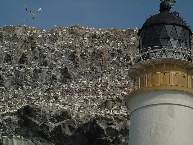 North Berwick gannet colony (credit and copyright: Andrew Palmer)