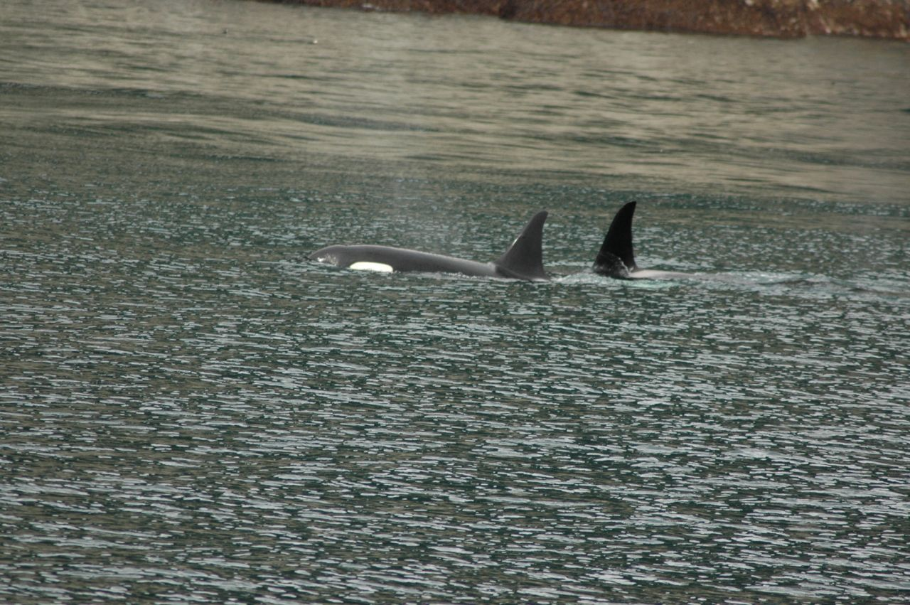 Day 3 Orcas_s
