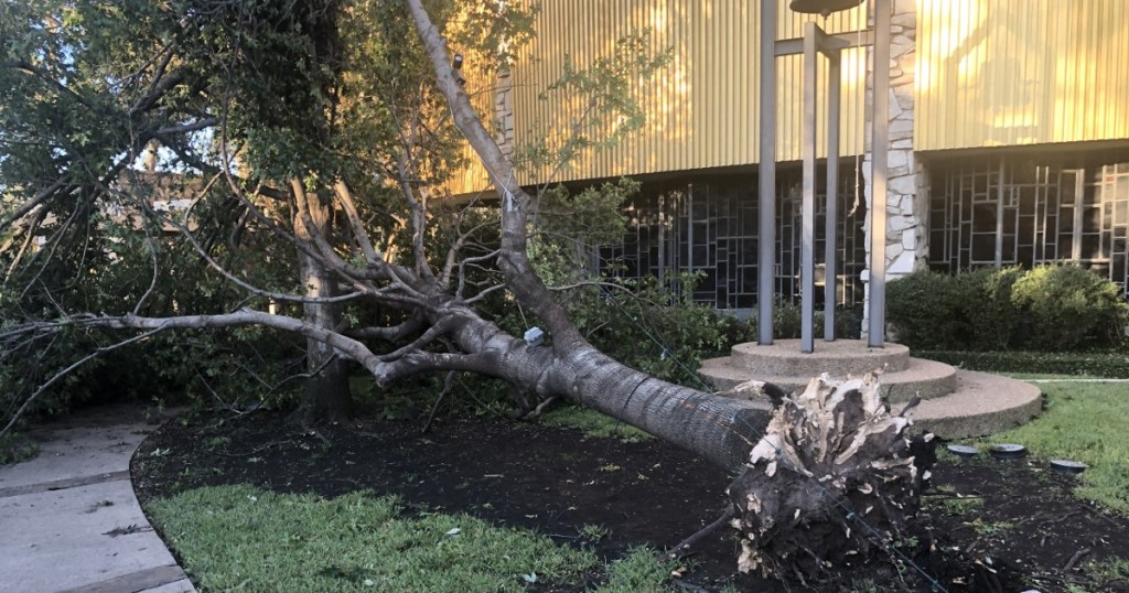 A downed tree at Troop 577's chartered organization. Once it's deemed safe, the Scouts plan to help the church clean up and rebuild.