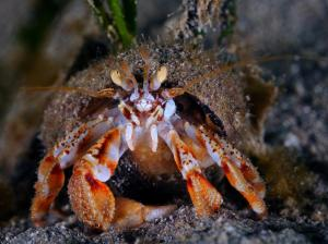 Hermit Crab by Darragh Norton