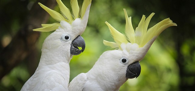 Recruiting auf Karrieremessen Feelgood Papagei