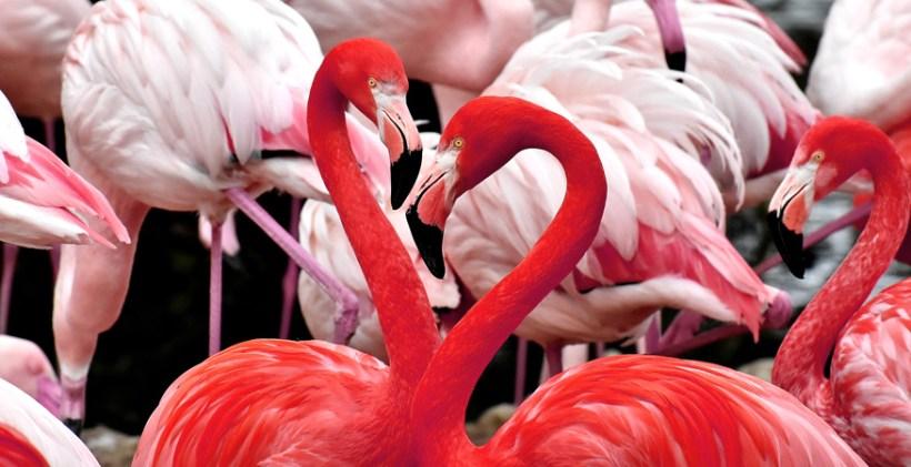 Recruiting auf Karrieremessen Recruiter Flamingo