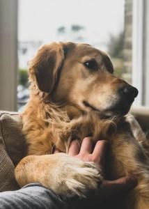 gesundes-Arbeitsleben-hund