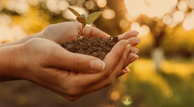 5 atitudes do dia a dia que podem melhorar o meio ambiente