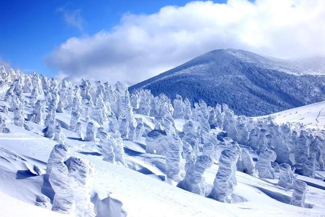 冬季限定!日本東北「樹冰」不思議,東北-山形藏王,冬天白雪皚皚,擁有世界獨一無二的奇跡樹冰。西伯利亞吹來的西北季風碰觸到松樹結冰,冬雪落下霧淞(針葉樹)層層白雪覆蓋,形成如「冰之藝術」般的美景。全球日本高山僅有要形成此壯觀的景色獨特地形、氣候等條件缺一不可。 | 東南旅遊