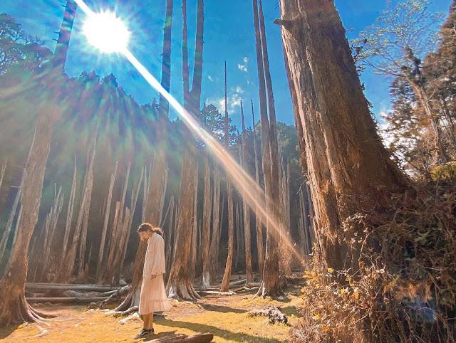 忘憂森林|東南旅遊