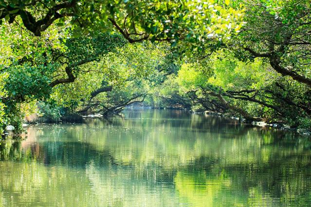 被譽為「台灣版的亞馬遜河」的四草綠色隧道,因兩旁茂密的紅樹林形成有如隧道一般的延伸,水面上倒映著翠綠的樹葉,就是這條夢幻水道夢得到小亞馬遜之稱的美名|東南旅遊