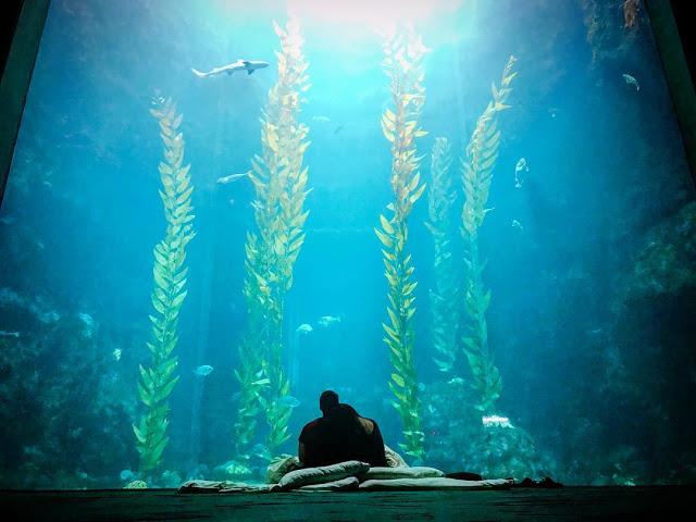 墾丁景點國立海洋生物博物館|東南旅遊